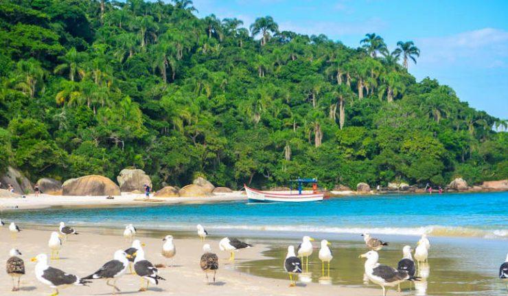 Ilha do Campeche: Praias de Floripa