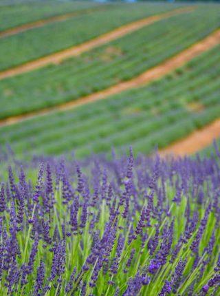 Provence-Roteiro-Europa-Destaques