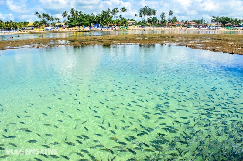 Melhores Pontos Turísticos de Alagoas e Pernambuco