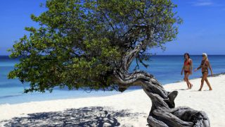 A famosa árvore de Baby Beach. Crédito da Foto: ATA