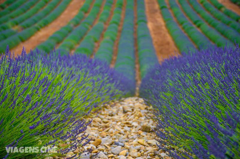 Estar no meio das plantações da Provence, como a de lavanda, é um espetáculo