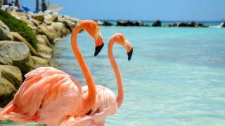 Aruba Dicas e Roteiro de Viagem - Como Chegar, Melhor Época, Onde Ficar