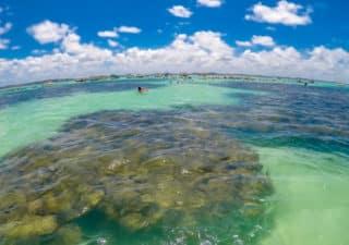 Piscinas Naturais de Maragogi: Galés e Taocas - Costa dos Corais Alagoas